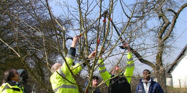 cigl-steinfort-emploi-competences-arbres